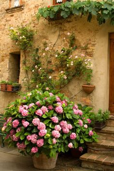 Hydrangeas in Pienza by TuscanSon | Italy