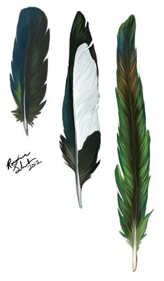 wingedgecko:    Black-billed Magpie (Pica hudsonia) feather study.  Sizes not to scale.