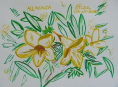 Allamanda, fleur tropicale jaune. Dessin d'Elize http://www.pigmentropie.fr/