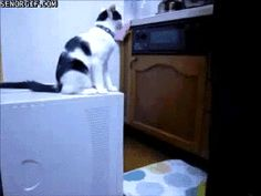 Because of this cat, who cleverly put the blame on someone else.   22 Reasons No Animal Can Be Trusted