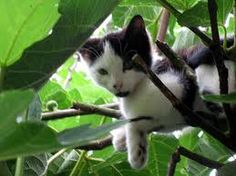 cats in trees