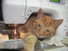 Does this happen in your home? How do your animals interfere with your sewing?
