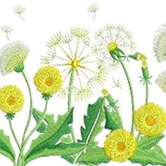 Welcome the warmth of summer with a set of sunny Dandelion designs from Sweet Heirloom.