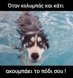 Today's Morning Mega Memes Greek Memes, Funny Greek, Funny Animal Quotes, Animal Memes, Top Memes, Best Memes, Funny School Memes, Hilarious Memes, Bring Me To Life
