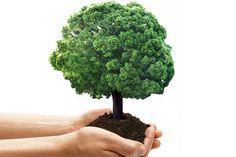 Wie steht es mit Ihrem Bewusstsein für die Umwelt? Machen Sie den myself Test und finden Sie heraus, wie umweltbewusst Sie wirklich leben