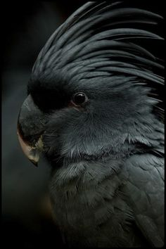 The reason birds can fly and we can't is simply because they have perfect faith, for to have faith is to have wings...♥
