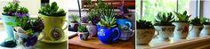 Saiba plantar em recipientes caseiros - Quer dar novos ares para o jardim da sua casa sem gastar muito? Que tal aproveitar os utensílios que já possui na hora de plantar? Jarras, bacias, xícaras, telhas e até mesmo baldes podem substituir, com facilidade e beleza, os tradicionais vasinhos de cerâmica. Mas, antes de começar a jardi... - http://www.ecoadubo.blog.br/ecoblog/2014/10/22/saiba-plantar-em-recipientes-caseiros/
