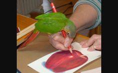 Artist parrot