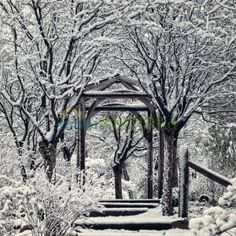 Snow covered trees. Photo: mobiiNSPIREd