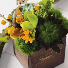 mandarin floral arrangement from olive and cocoa (star of bethlehem, trachilium, chartreuse cymbidium orchids, sunflower pods, fresh succulents and a natural manzanita branch)