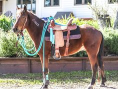 Cute little mustang! Love the mecate reins Cute Horses, Horse Love, Beautiful Horses, Western Horse Tack, Horse Barns, Western Saddles, Horse Stalls, Horse Gear, Horse Tips
