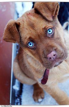 gorgeous blue eyes on liveinternet.ru