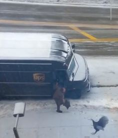 Wild Turkey vs UPS driver. We think this Turkey could be secretly working for FedEx! Without a doubt one of the viral videos of 2014 already. Funny Shit, The Funny, Funny Stuff, Funny Memes, Hilarious, Turkey Jokes, Joke Of The Day, Wild Turkey, Love My Job