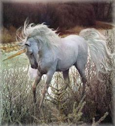 Gypsy Magic: Unicorn Myth and Lore ---- unicorns are wild creatures, only tameable by a virgin. Its spiralling horn is believed to have healing powers