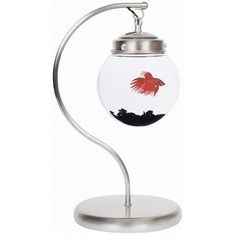 unusual fish tanks display your pet in a very creative manner. An LED light, which illuminates in moon white, is built into the top (does not shine on fish). The feeding holes are on top of the fish tanks. unusual fish tanks display your pet in a v Aquarium Design, Aquarium Ideas, Aquarium Fish, Aquarium Lamp, Glass Aquarium, Freshwater Aquarium, Aquariums, Aquarium Original, Conception Aquarium
