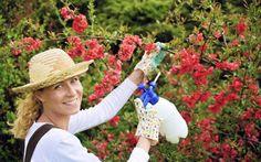 3 szkodniki, które niszczą Twój ogród. Jak się ich pozbyć? Poradnik #ogród #mszyca #szkodniki