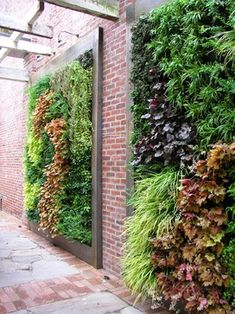 EcoWall living wall panel. It is a hydroponic planting panel that has an automated internal irrigation system