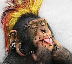 Afbeeldingsresultaat voor grappige apen