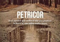 Petricor It is the name that receives the smell that produces the rain when falling on dry soils