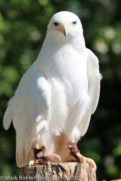 Freedom is freedom Pretty Birds, Love Birds, Beautiful Birds, Animals Beautiful, Exotic Birds, Colorful Birds, Aigle Animal, Rare Albino Animals, Red Tailed Hawk