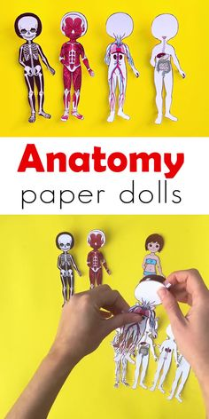 Study the human body anatomy with kids by making a set of printable anatomy paper dolls with each layer showcasing a different body system! Human Body Unit, Human Body Systems, Body Preschool, Human Body Activities, Animal Adaptations, Human Body Anatomy, Paper Dolls Printable, Rainy Day Activities, Physical Education