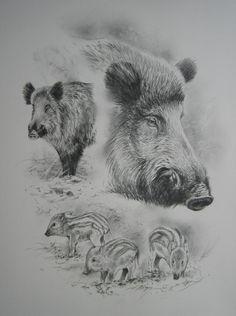 Wild Animals 644859240367311190 - Porc sauvage Source by NicoDelRico