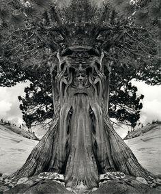 Untitled (Tree Goddess)