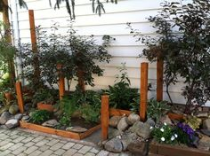 Creative use of old split-rail fencing as winter interest