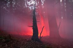Amelia Bauer created the series 'Burned Over' in the forests of Central New York. Inspired by the mysterious stories that evolve around the 'burned-over district' of upstate New York, Amelia used artificial lighting to act as an outside force on the landscape