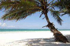 Diani beach Kenya,Africa Our Africa Diani Beach Kenya, Mombasa Kenya, Vacation Destinations, Dream Vacations, Places To Travel, Places To See, Kenya Africa, Going On Holiday, Most Beautiful Beaches