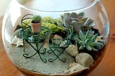 I am sure you love terrariums, and you can make your own terrarium with these unique DIY ideas for your indoor garden. Indoor terrariums are adorable and perfect for your indoor settings. Succulents In Glass, Planting Succulents, Succulent Plants, Terrarium Diy, Terrarium Containers, Little Gardens, Small Gardens, When To Plant Seeds, Pot Jardin