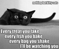 Oh my Lord!!!! Definately my kitties!