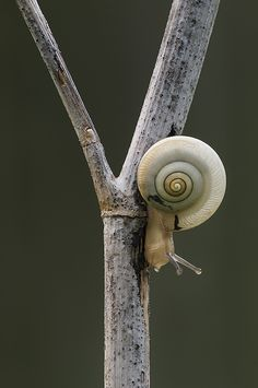 It's not a bug, buts it's a creepy crawly.  And this snail is super cute!