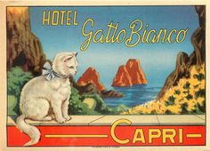 CAPRI ITALY HOTEL GATTO BIANCO WHITE CAT SPECTACULAR OLD LUGGAGE LABEL