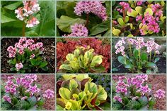 Blooms in winter Rabbit Resistant Plants, Mail Order Plants, Plant Nursery, Salvia, Spring Flowers, Perennials, Bloom, Gardening, Backyard Ideas