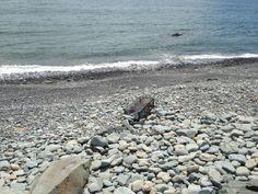 Fishermen's Cove in Nova Scotia Canada! Beautiful place.