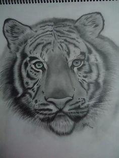"""Tigre Blanco"". Lápiz portamina 2b, 4b sobre papel blanco. Lápiz de color para los ojos. #tigre #dibujo #arte"