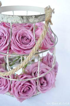 Rose di Agosto