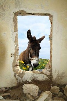 view from a window in the good ole country Donkey Donkey, Baby Donkey, Cute Donkey, Farm Animals, Animals And Pets, Funny Animals, Cute Animals, Beautiful Creatures, Animals Beautiful