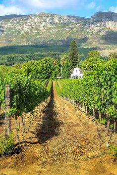 Best Things to Do in Cape Town, South Africa Stellenbosch Wine Region in South AfricaThe Things Things or The Things may refer to: Le Cap, Cape Town South Africa, Travel Planner, Travel Guides, Travel Tips, Travel Destinations, Travel Info, Holiday Destinations, Budget Travel