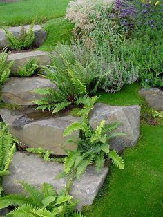 Irish Moss & ferns  I love how irish moss covers the ground between rocks like a cozy blanket