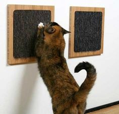 Give your cat something to sink her claws into while eliminating clutter from your floors.