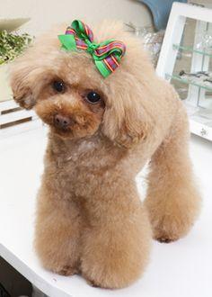 deco ribbon --愛犬の友 ヘアスタイルカタログ--