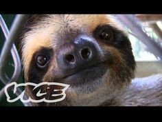 Sanctuary For Baby Sloths
