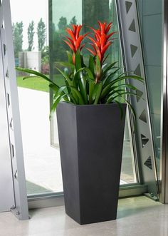 House Plants Decor, Plant Decor, Container Plants, Container Gardening, Outdoor Plants, Outdoor Gardens, Plants Indoor, Peonies For Sale, Growing Peonies