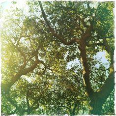 Outdoorsy-I can feel the sunshine