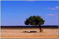 Millennium old trees