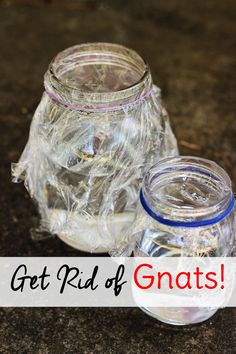 How do you get rid of gnats in the house? If these pests have invaded your home, learn how to get rid of them with this homemade gnat trap.