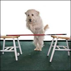 52 tricks to teach your dog - an active mind keeps your dog happy