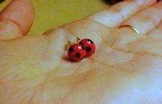 Ladybug's miraculous DIY http://hannahdahuman.tumblr.com/post/135643504557/ladybugs-miraculous-diy-done-by-hannahdahuman